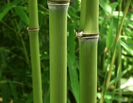 calzini bambù