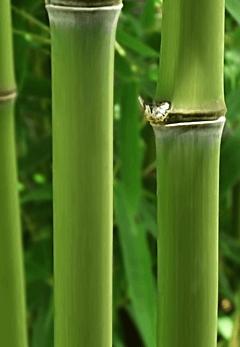 calzini-viscosa-calzini-bambù.png